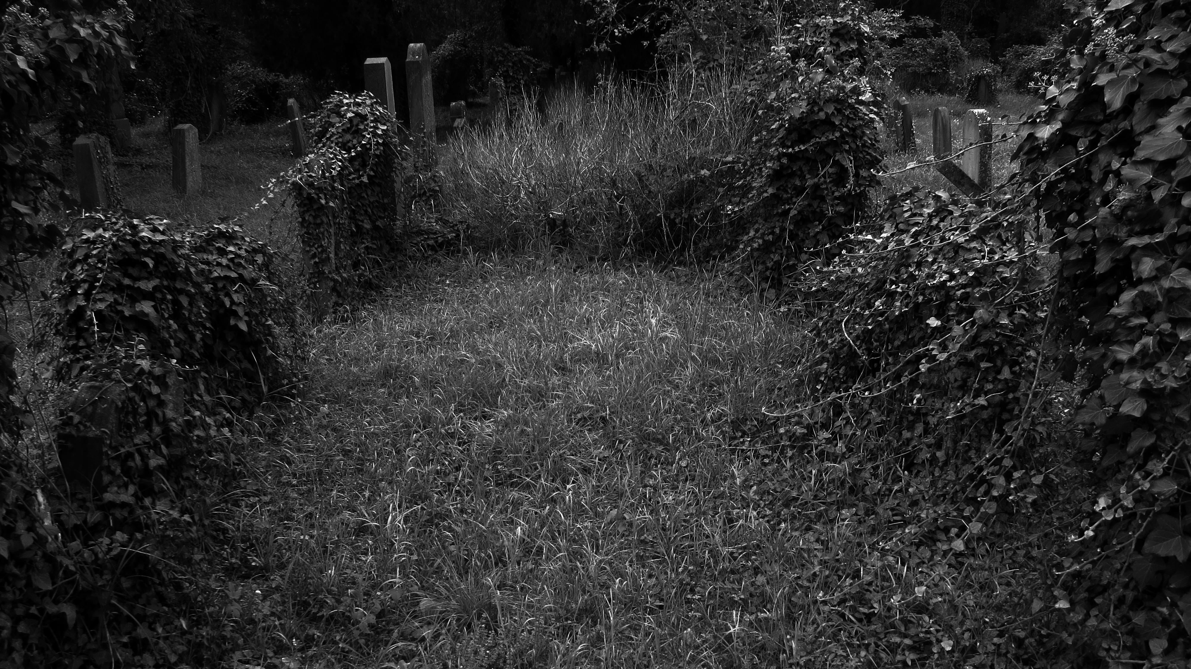 jewish cemetery wien friedhof