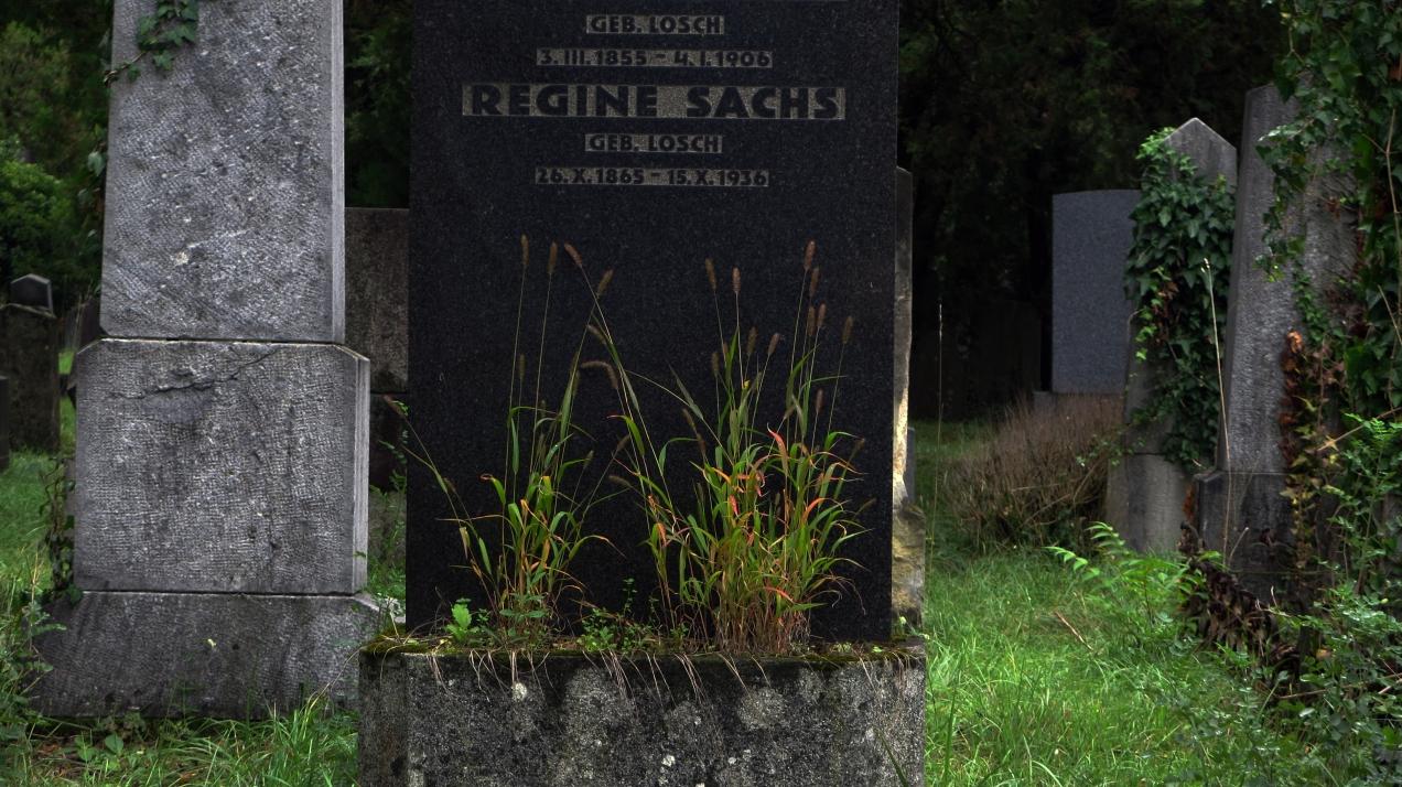 wien jewish cemetery sachs