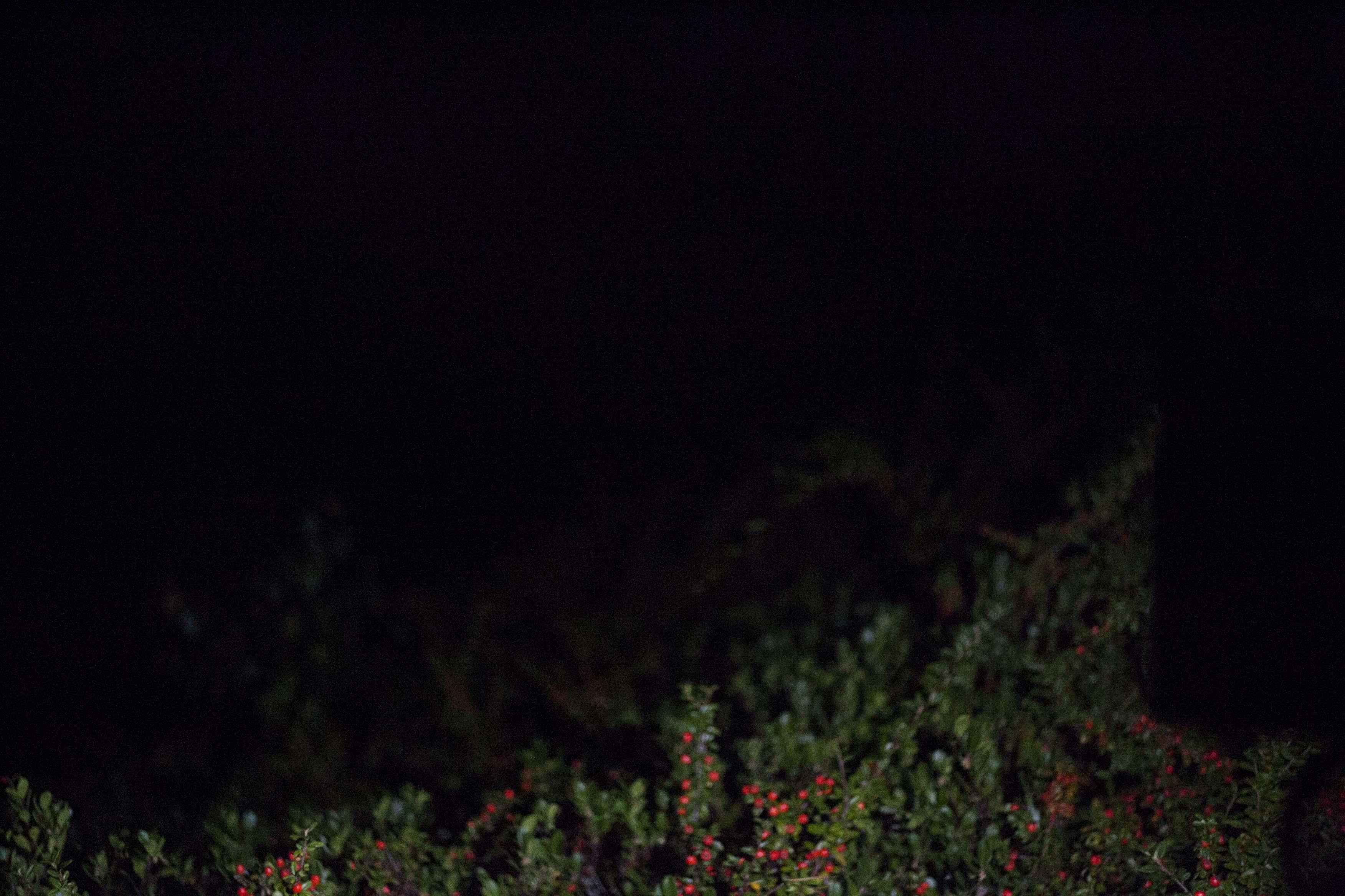 night light 11