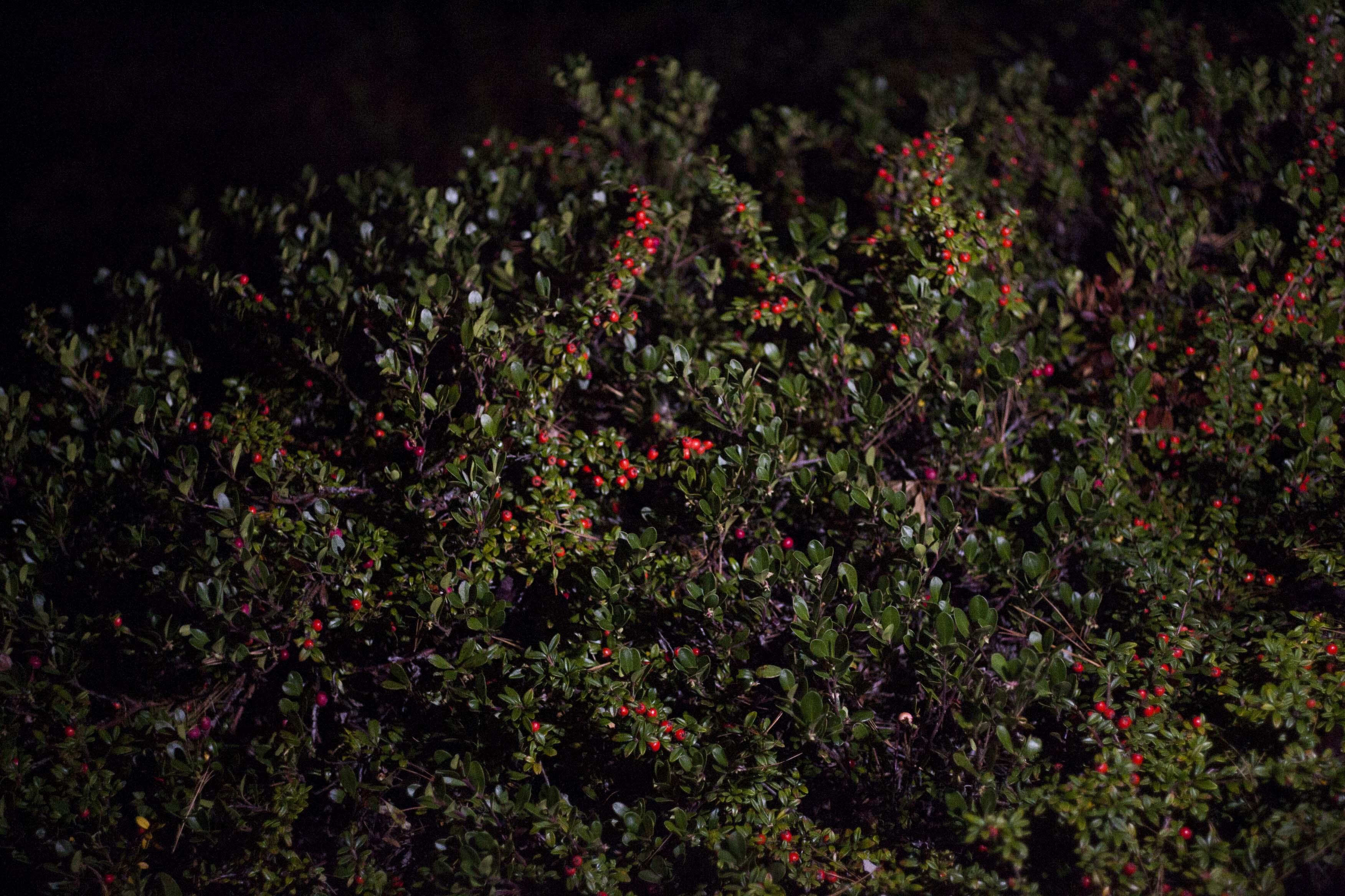night light 9.jpg